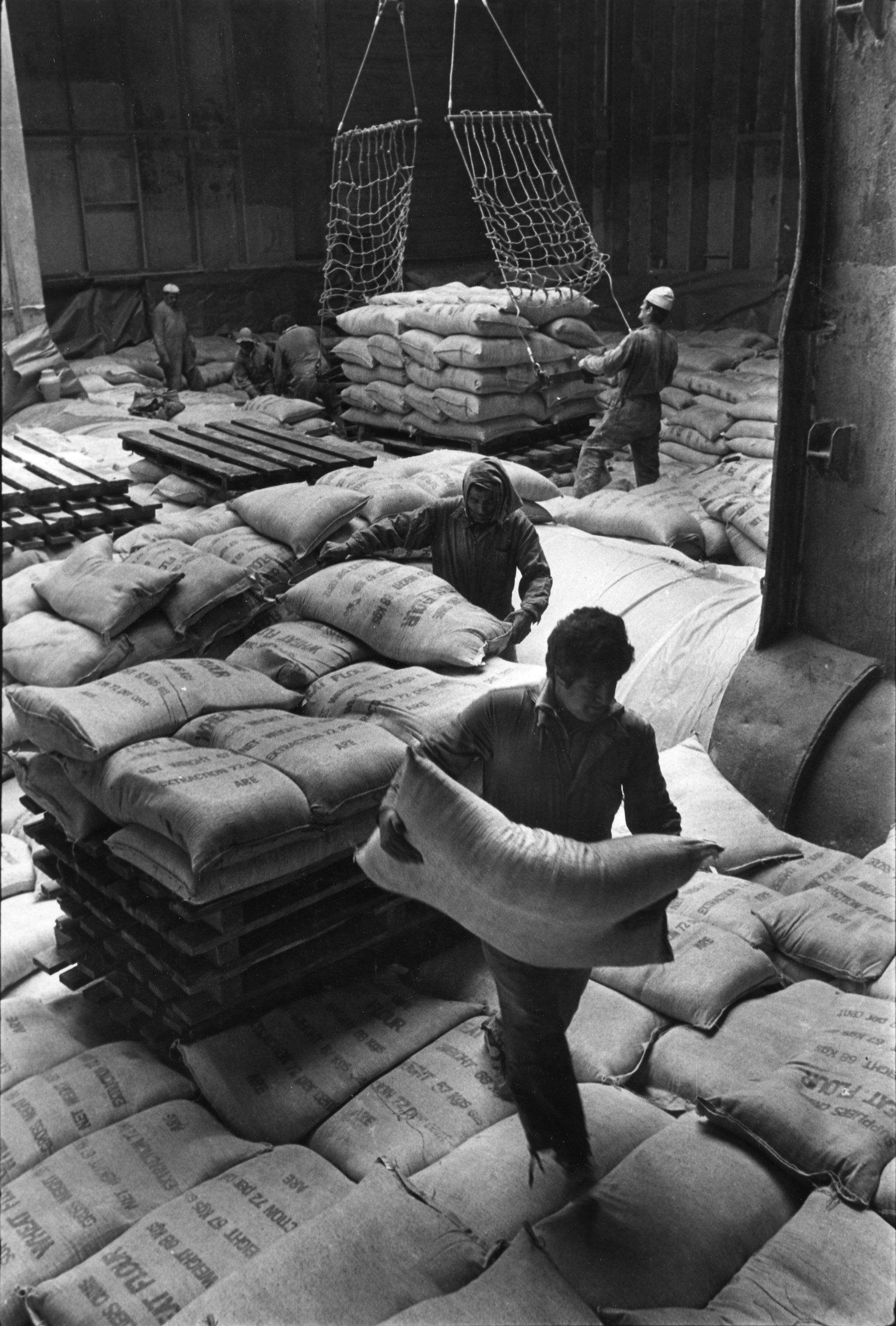 dockers, 1982-1984