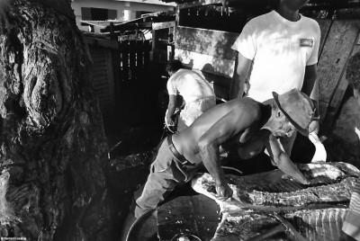 L'abattage du cochon, La Pointe au Sel, 1993 © Bernard Lesaing