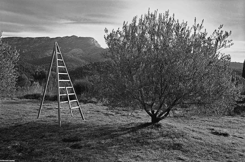 Préparatifs pour la récolte des olives, Vauvenargues, 2011, Bernard Lesaing