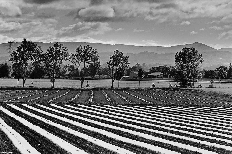En bordure de la départementale, Le Puy Sainte Réparade, 2010, Bernard Lesaing