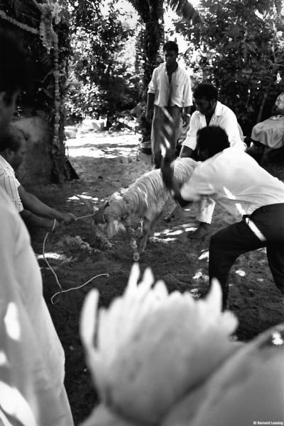 Service de Karli et sacrifice d'animaux, chapelle privée, Piton Saint-Leu, 1990 © Bernard Lesaing