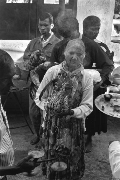 Offrandes d'animaux au temple de Trois-Bassins, 1992 © Bernard Lesaing